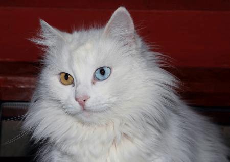 猫の画像 p1_8